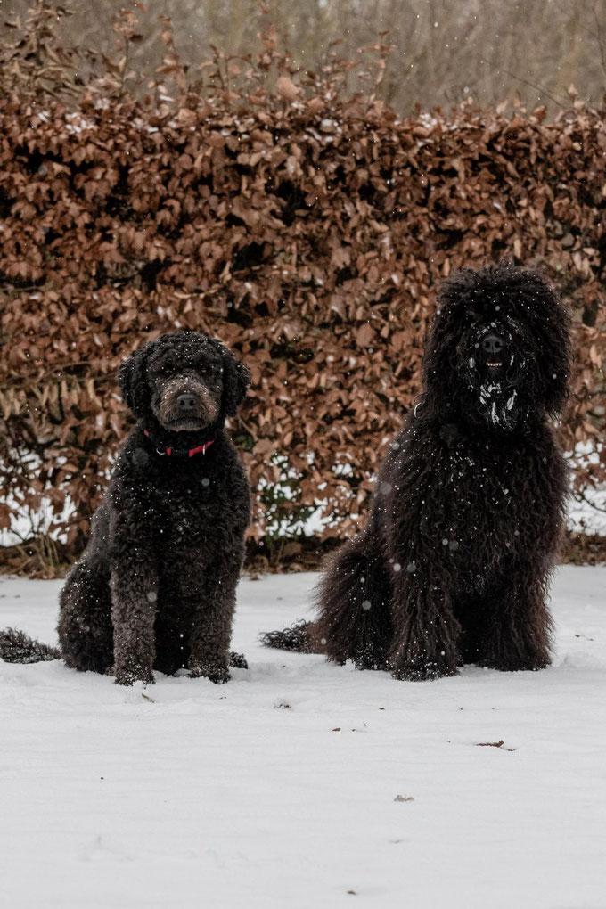 Zum Ende des Spaziergangs fing es dann an, immer heftiger zu schneien.