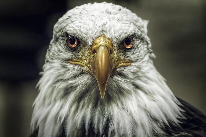 Krafttiere finden Trommelreise Spirits Adler Weißkopfadler Schamanismus Schamanenzauber Quantenheilung CQM Aura-Reading Aura-OP Intensi Kraftübungen