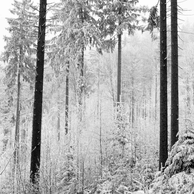 Wanderer (Copyright Martin Schmidt)