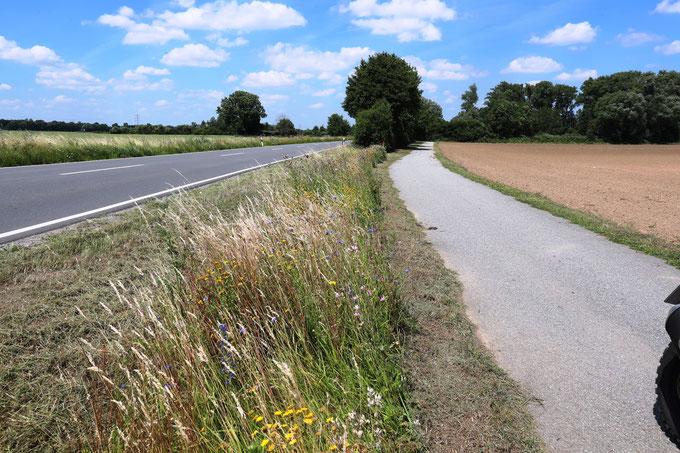 So geht es auch - Beispielhafter Erhalt von Blühstreifen am Straßenrand   Bild: Jürgen Schneider