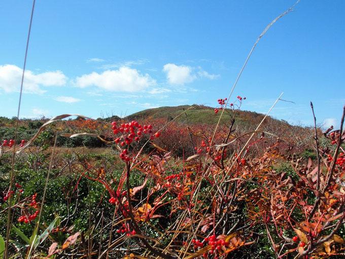 ナナカマド越しに赤兎山頂方面を望む。