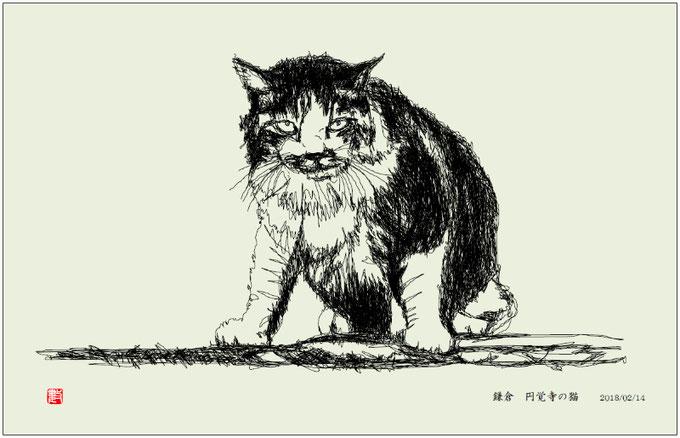 円覚寺の猫 俳画 2018/02/14制作
