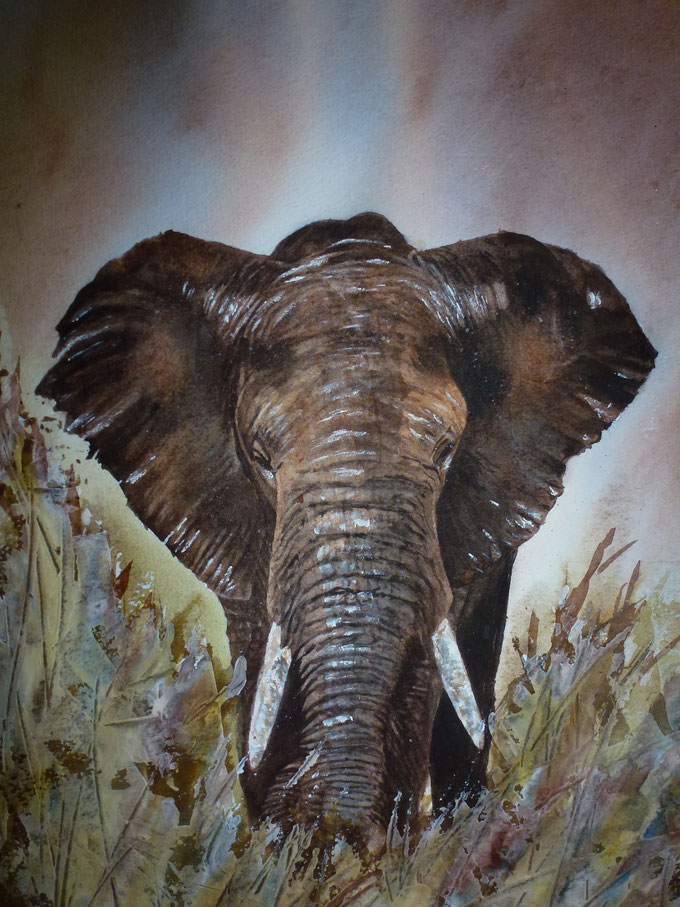 ELEPHANT 50 x 60