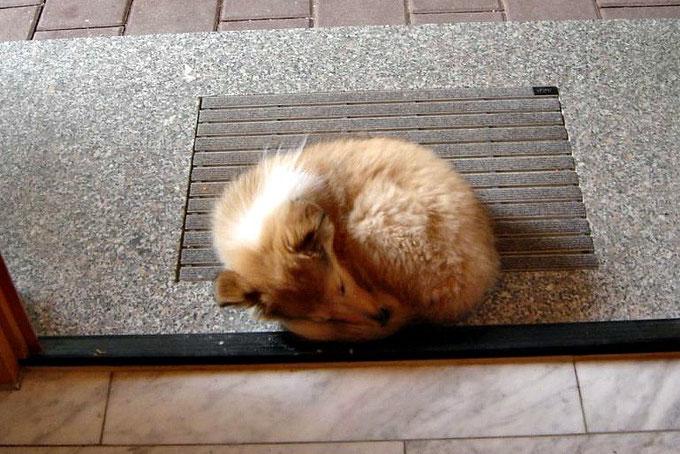 Ein Füchslein <3  Auch Bailey wird mal müde :-)