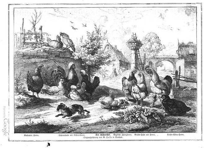 Der Hühnerhof - aus: Die Gartenlaube (1860)