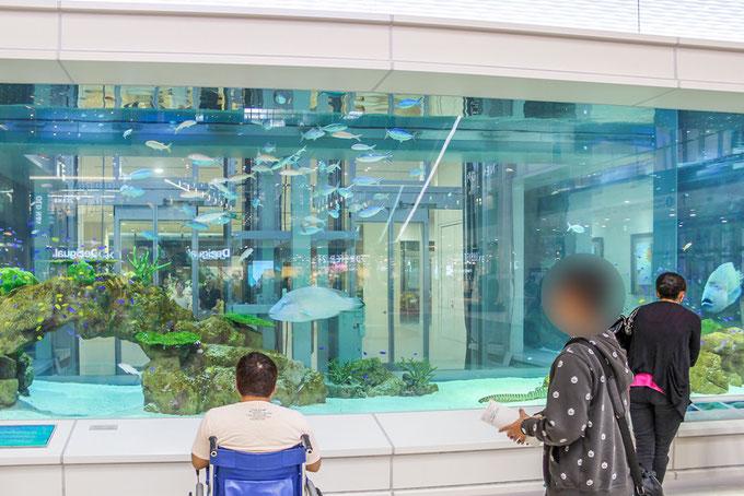 イオンライカム沖縄内の巨大な水槽の画像