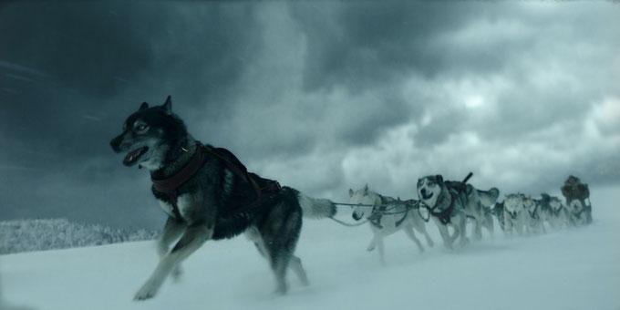Bild: Leithund Togo führt den Schlitten durch die kalte Wildnis von Alaska. | Disney