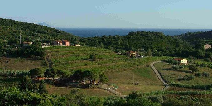 Isola d'Elba. Itinerario di vino.