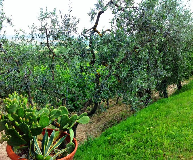 Cortona. Itinerari di vino. Foto Blog Etesiaca.