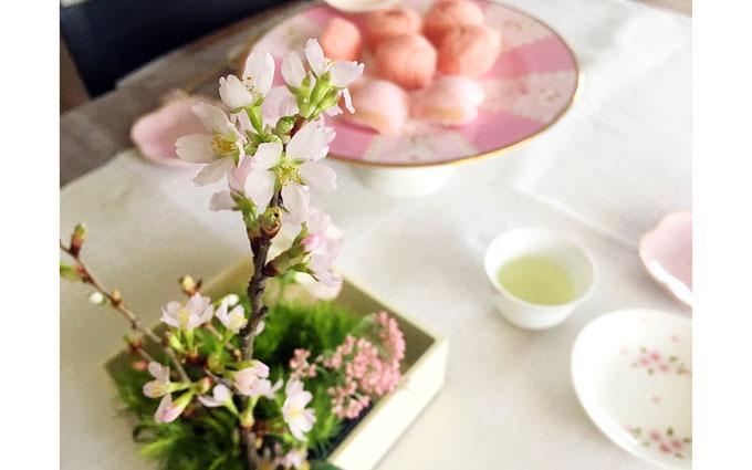 美意識を高める食器とお花の世界 第6回 おうちでお花見、桜を飾ってみよう! ㉕
