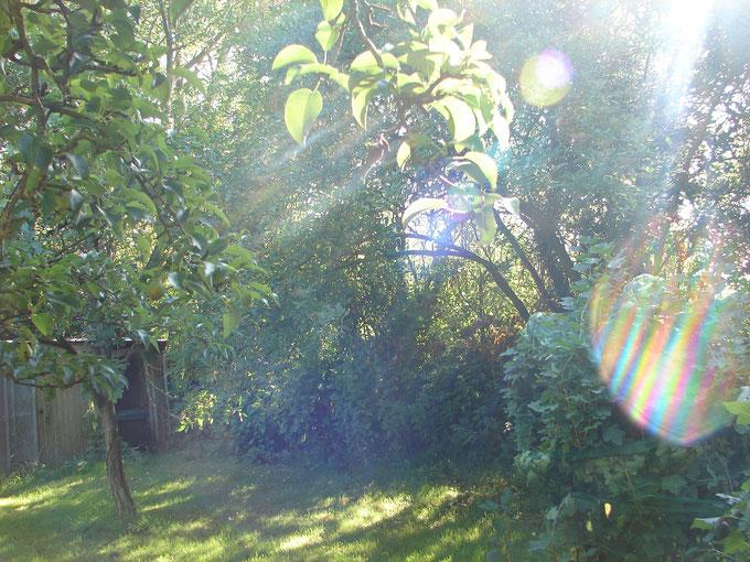 """©www.lichtwesenfotografie.com """"Evas Gartenparadies"""""""