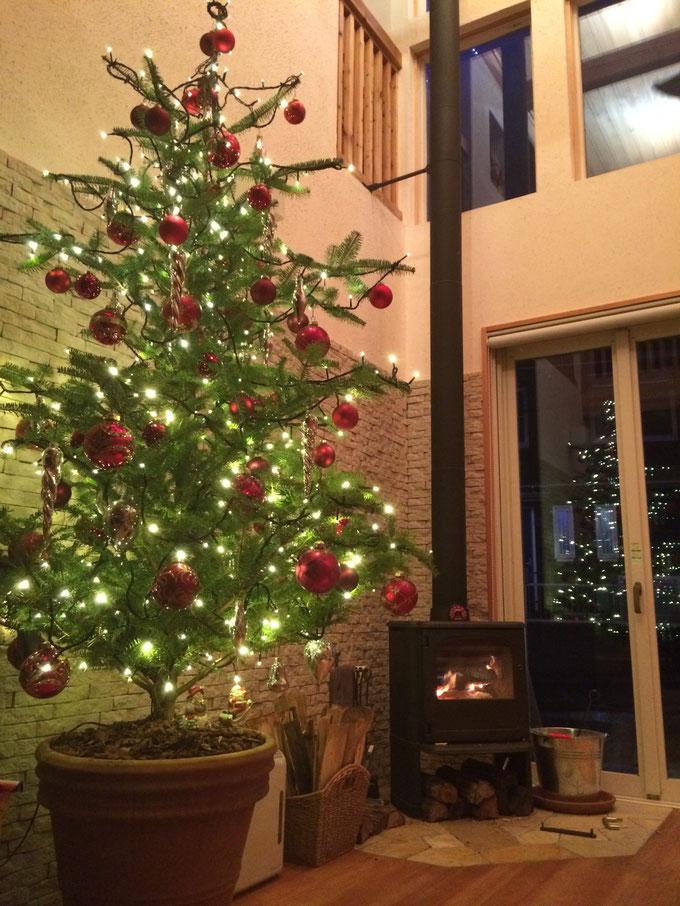 樅の木の家 生木のクリスマスツリー