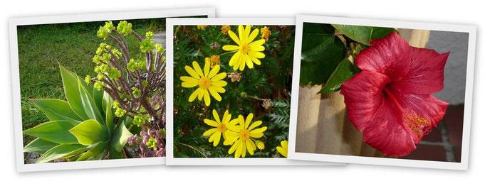 An der Costa Blanca grünt und blüht es das ganze Jahr über, auch in den Wintermonaten. Diese Fotos wurden im Januar aufgenommen.