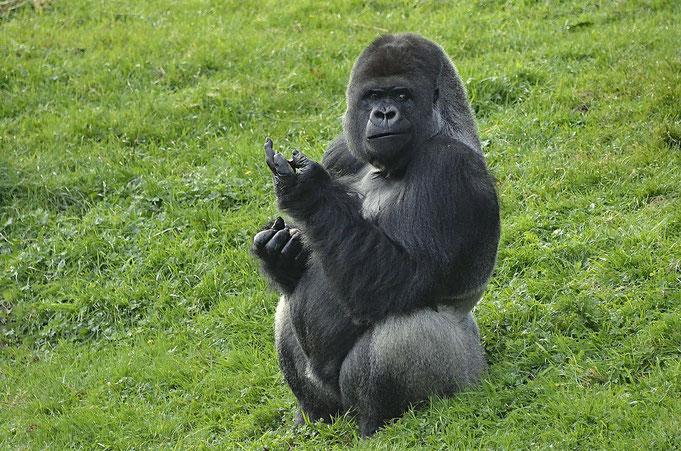 MAKULA / Gaia Zoo Kerkrade (Niederlande) / © Heike Arranz Rodriguez