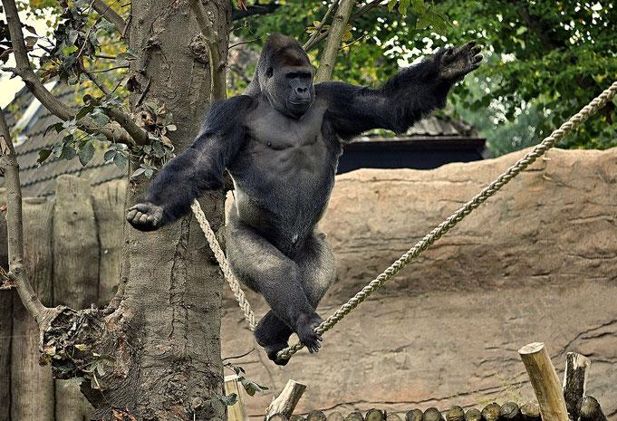 KIDOGO / Krefelder Zoo / © Heike Arranz Rodriguez