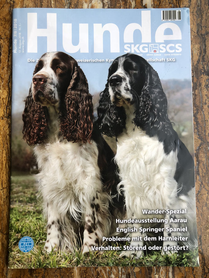 News - englisch-springer-spaniels Jimdo-Page!