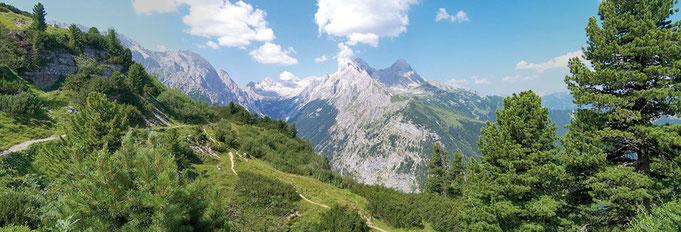 Bild: Zirbe, Gebirge