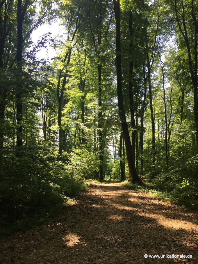 Wald, Friedwald Wangen