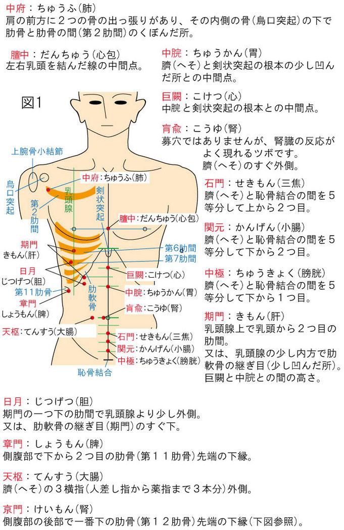 内臓と募穴(ツボ)