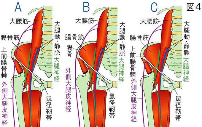 外側大腿皮神経の走行