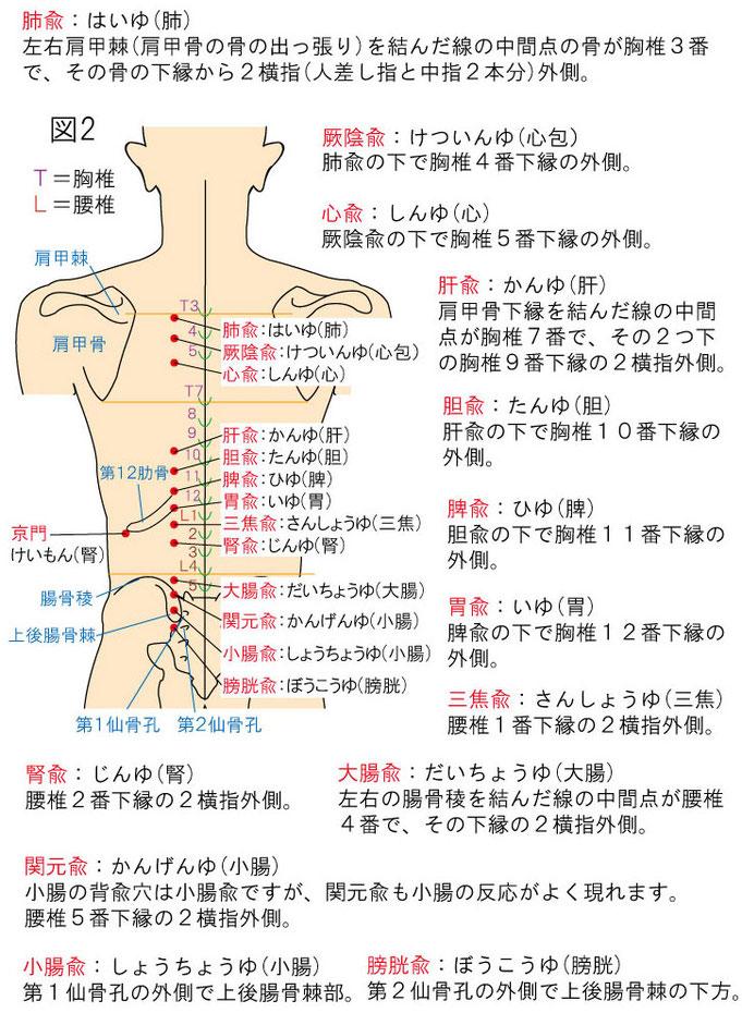 内臓と背兪穴(ツボ)