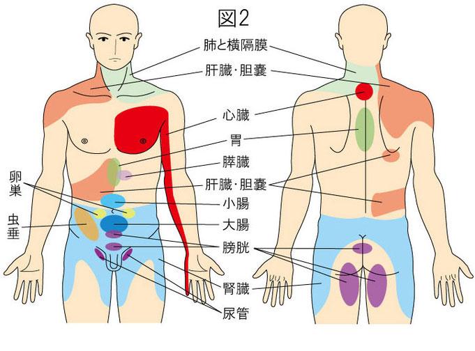 内臓からの関連痛(放散痛)
