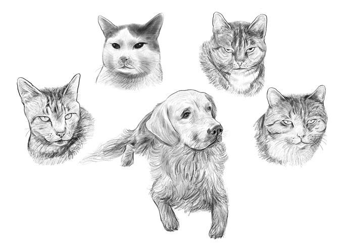 Karikatur, Portrait Zeichnung - Hund, Katze, Haustier