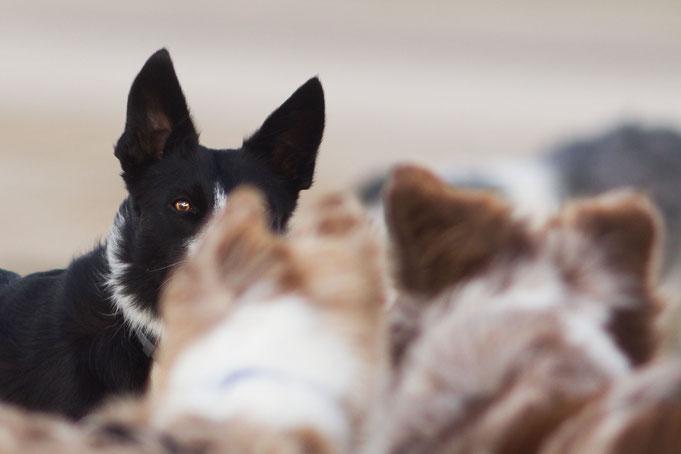 Urlaub mit Hund in der Normandie. Notfalllexikon.