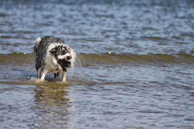 Hund, Normandie, Urlaub, Ferien, Meer, Hundestrand