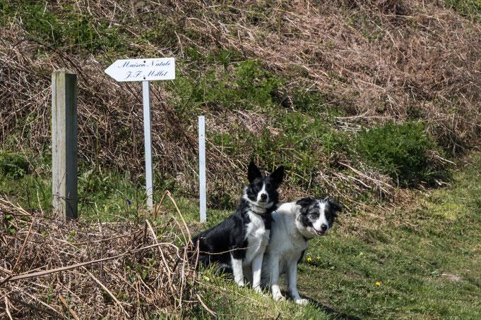 Zwei Border Collie possieren am Hinweisschild zu Millets Geburtshaus bei Grouchy
