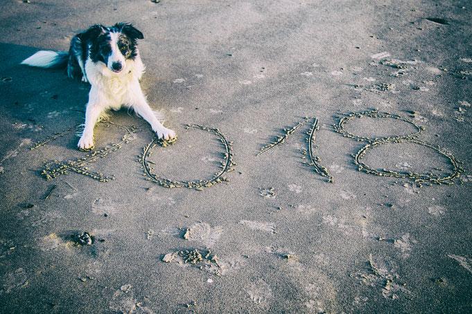 Urlaub mit Hund in der Normandie - Jahresrückblick 2017