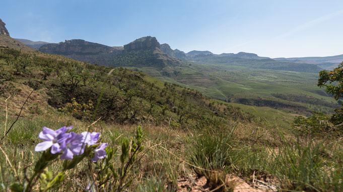 alpine heath resort | drakensberge | südafrika