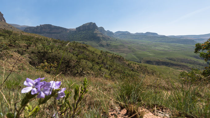alpine heath resort | drakensberge | südafrika