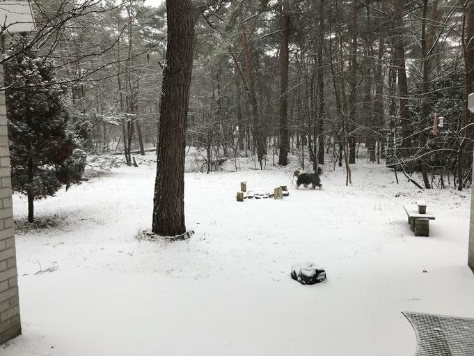 Onze eerste kennismaking met ons eigen bos.....