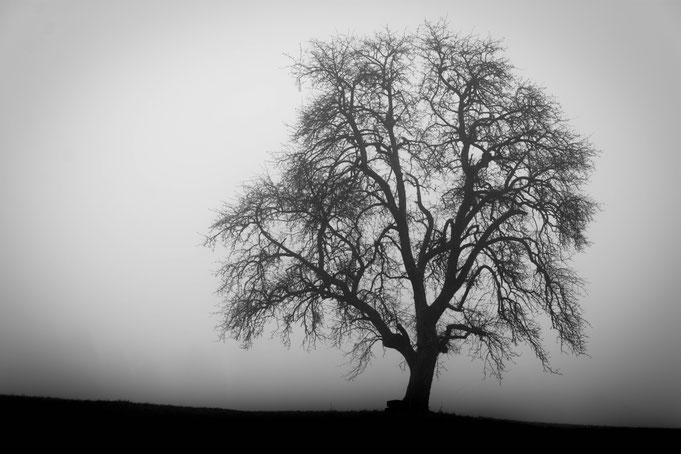 Andrea - Foto 11 - Mystischer Nebel