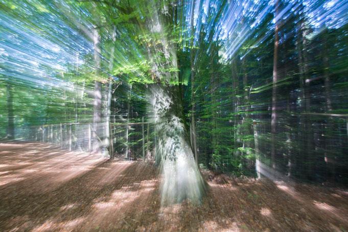 Andrea - Foto 3 - Die geheime Kraft der Bäume...