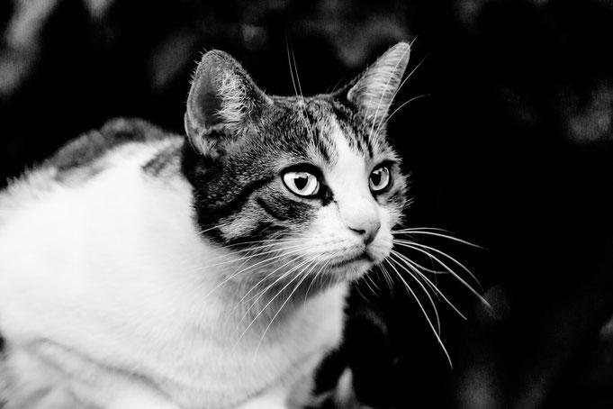 Gabi - Foto 5 - Chat noir??