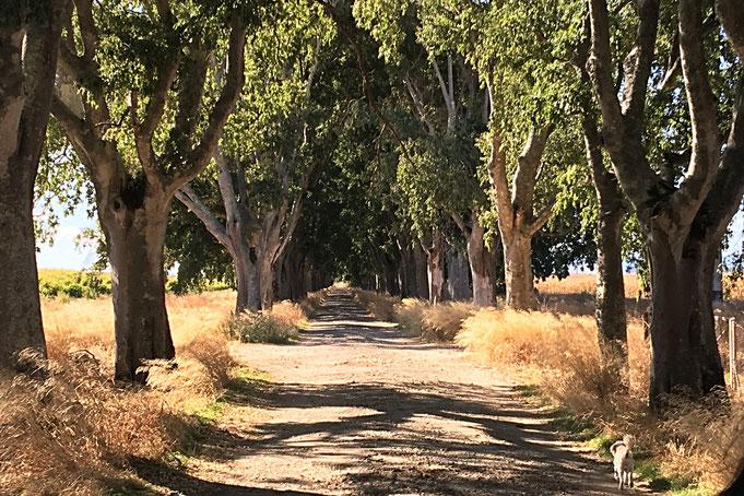 Allee bei Golega (Portugal), Jeder Weg beginnt mit dem ersten Schritt (Content Strategie), Wege muss man beschreiten.