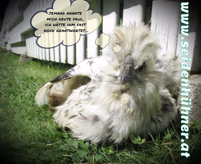 Seidenhühner  - meist nur zu Dekorationszwecken zu gebrauchen... ;-)