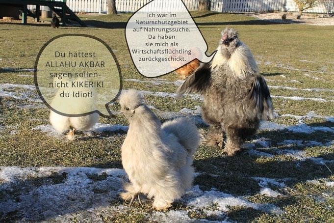 ...das Wort zum Sonntag - direkt aus unserem Hühnerstall....