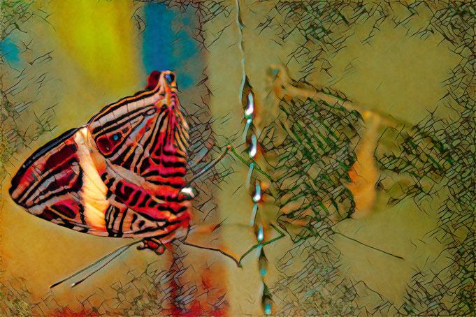 Peter Adam, Makro, pa-foto, Natur, Fotografie, Photographie, Photokunst, Fotokunst