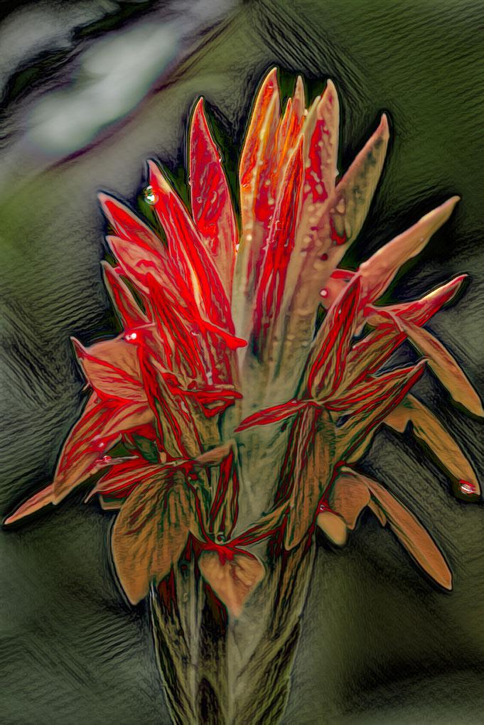 pa-alfa.com, Kunst, Fotografie, Bilder, Natur, Peter Adam, Fotokunst, Bildbearbeitung
