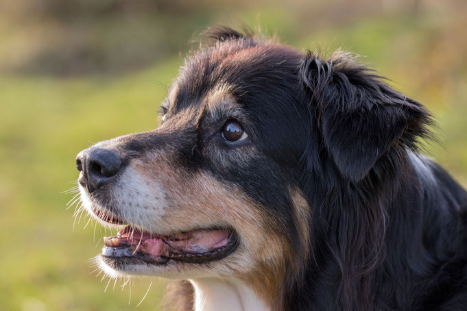 Peter Adam, Makro, pa-foto, Natur, Fotografie, Photographie, Photokunst, Fotokunst, Tier, Tierfotografie, Hunde
