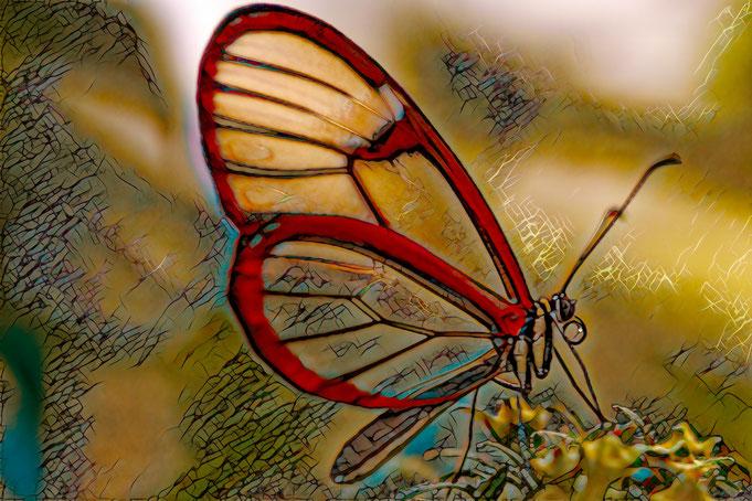 Waldgeist, greta morgane, Schmetterling, pa-foto.com, Peter Adam, Fotografie, Danainae, Fotokunst, 85665, Moosach