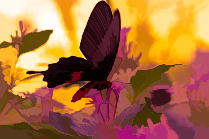Kleiner Mormone, geschmolzenes Gold, pa-foto.com, Peter Adam, Fotografie, Schmetterling, Fotokunst