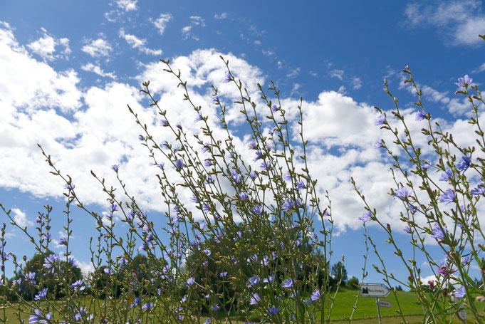 Moosacher Blühstreifen