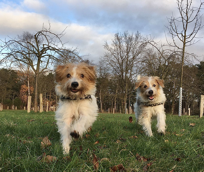 Immer noch fit...heute mit Giuli zusammen im Park