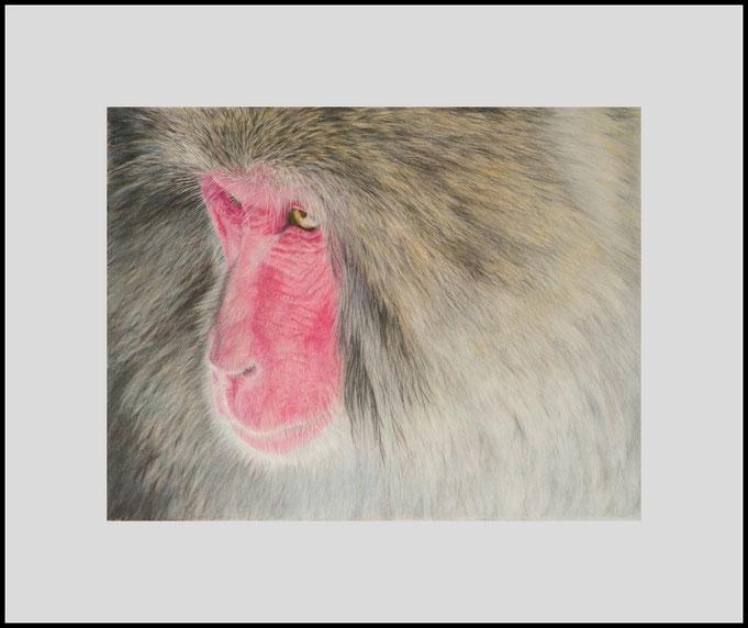Tierzeichnung, Affe, Makake, Farbstift, Buntstift, Zeichnung