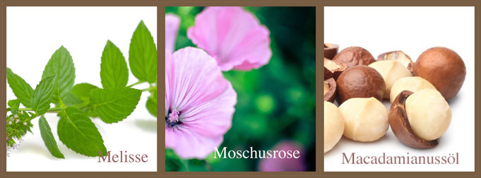 Macadamianussöl Melisse Moschusrose