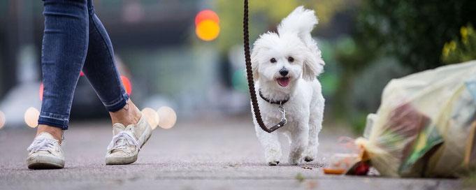 Hund beim Spaziergang an der Leine